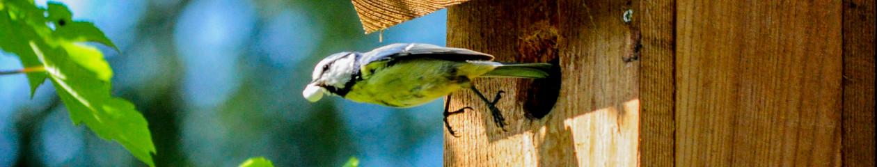 Kamera im Vogelhaus